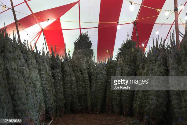 Christmas trees wait for buyers at a Holiday Sale Christmas Tree lot on November 29 2018 in Miami Florida Reports indicate that the US is suffering...
