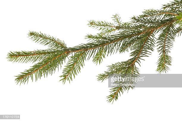 Brindille Décoration de Noël