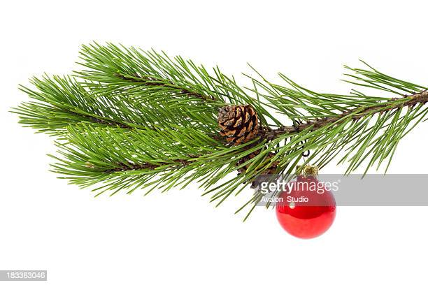 Weihnachten-Zweig
