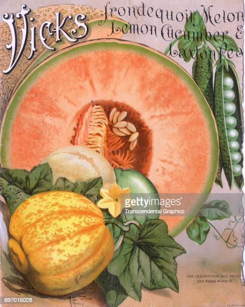 Chromolithographic advertising page from a Vicks Company seed catalog Detroit Michigan 1910