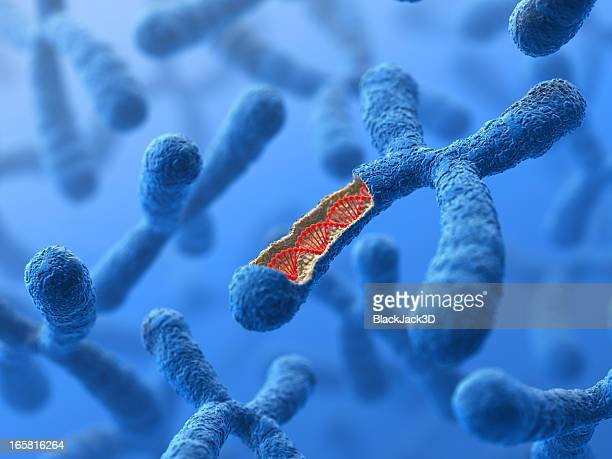 Chromosome. DNA