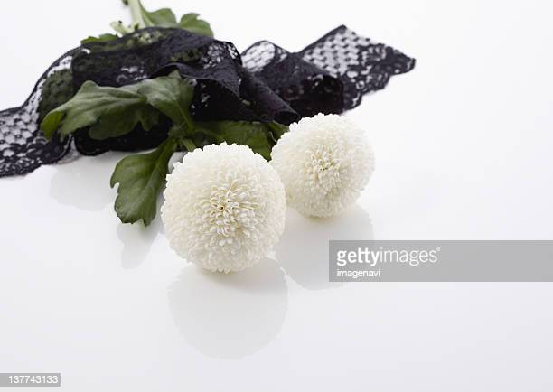 Chrysanthemums and lace (mourning image)