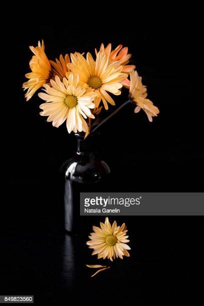 Chrysanthemums in black vase
