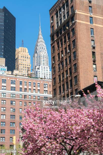Chrysler Building and other Midtown Manhattan buildings can be seen rows of Cherry blossoms trees at Park Avenue in Manhattan New York City.