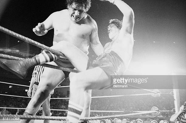 Chuck Wepner is draped on the ropes about to fall through after Andre the Giant picked him up and tossed him out of the ring in the third round of...