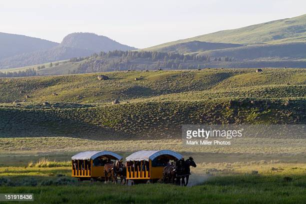 Chuckwagons returing in late afternoon Yellowstone