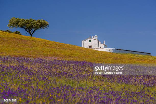 Church, Cork Tree, Wildflowers in Portugal