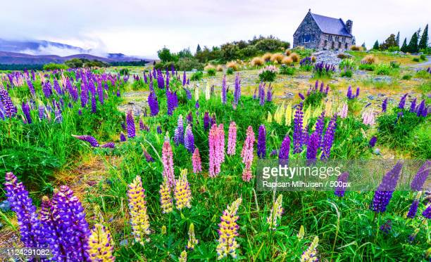 church good shepherd new zealand - new zealand stockfoto's en -beelden