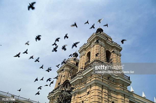 church in lima - lima animal stock pictures, royalty-free photos & images