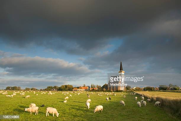 church of den hoorn, texel - church stock pictures, royalty-free photos & images