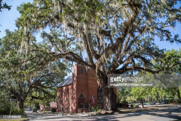 church of st. james under tree with spanish moss, tallahassee, florida, usa - bromeliaceae stock pictures, royalty-free photos & images