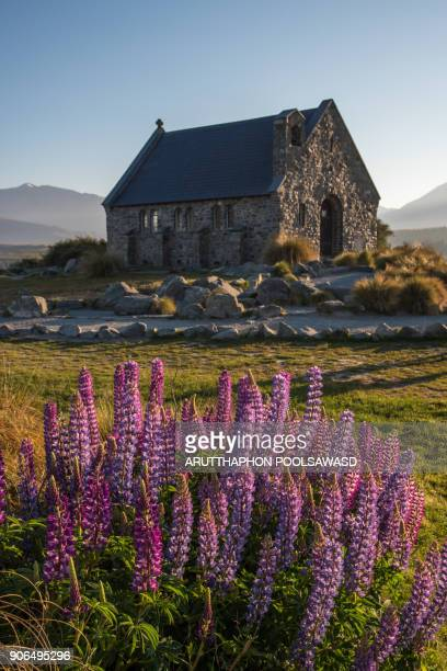 church of the good shepherd and lupine blooming flowers,tekapo lake, new zealand - south island new zealand stock pictures, royalty-free photos & images