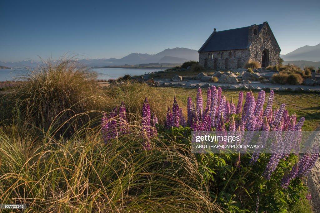 Church Of The Good Shepherd and lupine blooming flowers,Tekapo lake, New Zealand : Stock Photo