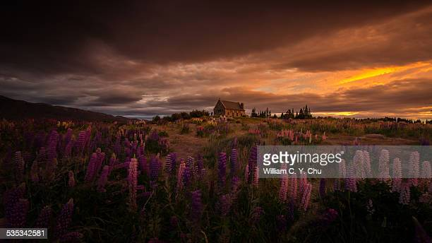 Church of the Good Shepherd & Lupins