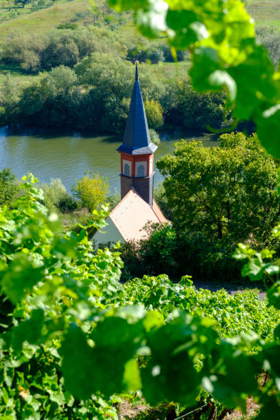 Church surrounded with vineyards