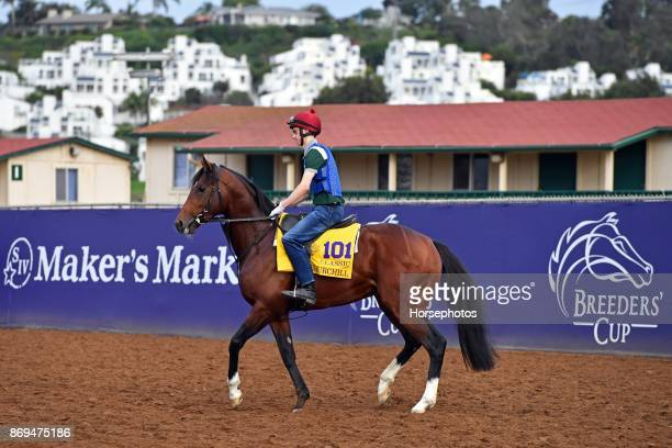 Churchill on track in preparation for the Breeders' Cup at Del Mar Race Track on November 2 2017 in Del Mar California