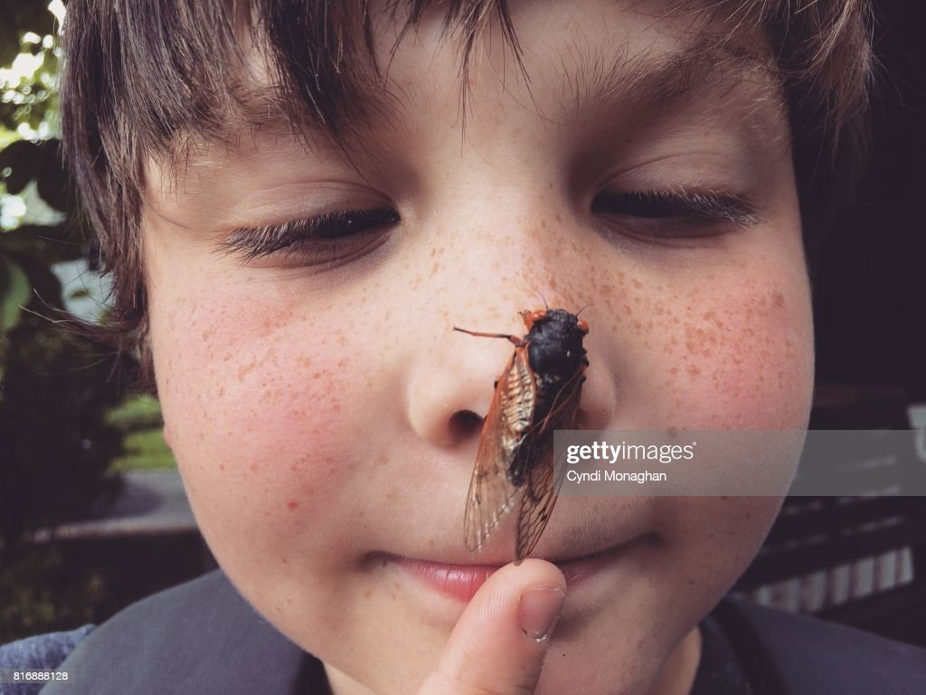 Cicada Invasion : Stock Photo