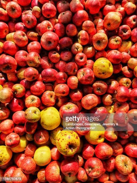 cider apples - ripe stock pictures, royalty-free photos & images
