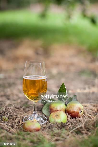 Cider Farm, Gloucester