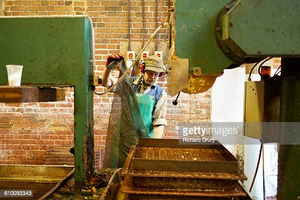 Cider maker preparing apple press