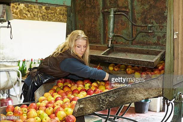 cider maker removing bad apples - cider stock pictures, royalty-free photos & images