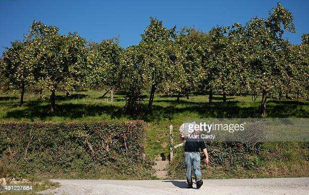 Cider maker Roger Wilkins owner of Wilkins Cider Farm carries a bag of apples from his orchard at his farm in the village of Mudgley on October 2...