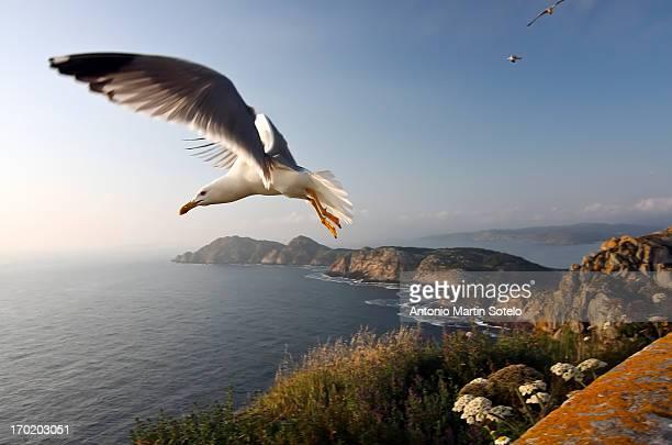 cies island - galicia fotografías e imágenes de stock