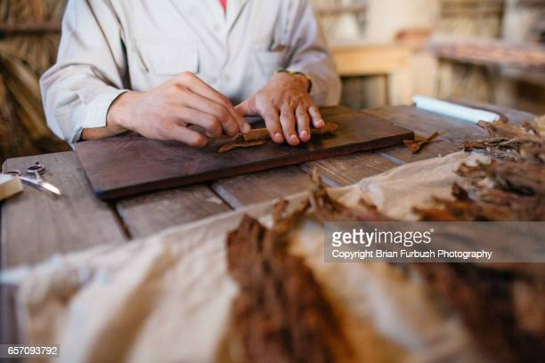 cigar roller in vinales - valle de vinales stock photos and pictures