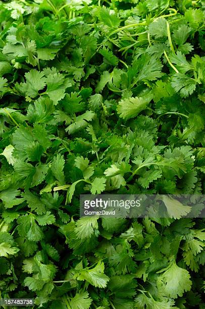 Cilantro on Display in a Produce Market