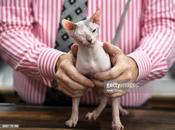 Cilya the Donskoy cat 6monthsold gets held in place by allbreeds judge Harley DeVilbiss during a preliminary judging round of the TICA World of Cats...