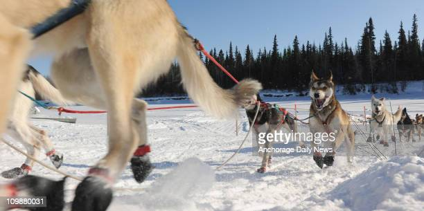 Cim Smyth from Big Lake Alaska arrives at the Nikolai Alaska checkpoint during the Iditarod Trail Sled Dog Race on Tuesday March 8 2011