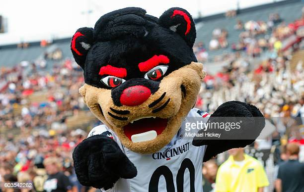 Cincinnati Bearcats mascot is seen during the game against the Purdue Boilermakers at RossAde Stadium on September 10 2016 in West Lafayette Indiana