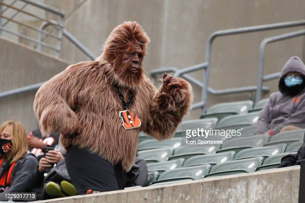 Cincinnati Bengals fans dresses up like Bigfoot during the game against the Cleveland Browns and the Cincinnati Bengals on October 25 at Paul Brown...