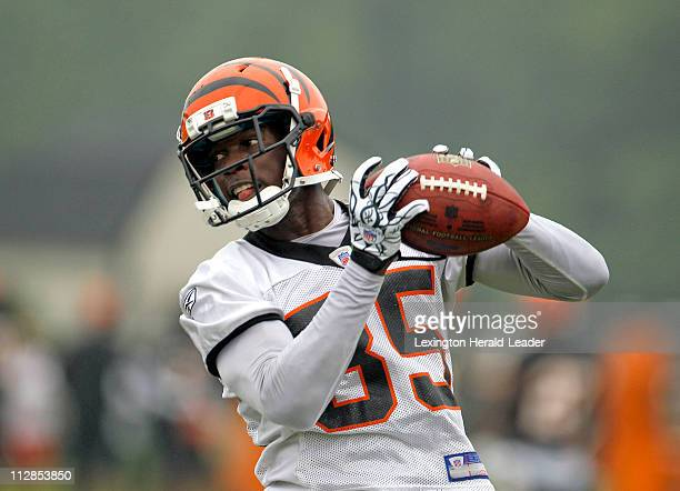 Cincinnati Bengals wide receiver Chad Ochocinco catches a pass on opening day of the Bengal's fall training camp at the Toyota Stadium in Georgetown...