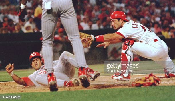Cincinnati Red Aaron Boone is tagged out at home plate by St Louis Cardinal catcher Tom Lampkin in the sixth inning Boone was thrown out of the game...