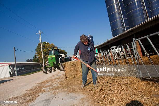 Cindy Roden works with the calves at the RobNCin farm on September 29 2010 in West Bend Wisconsin The farm has roughly 400 head of cattle and about...