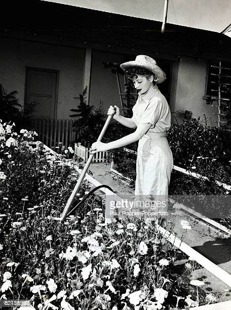 circa 1950 Lucille Ball pictured at work in the garden of her Hollywood home American actress Lucille Ball will be remembered as the dizzy sitcom...
