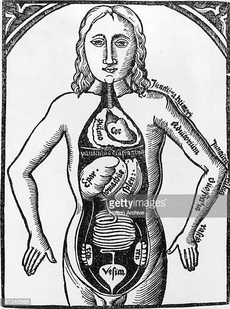 Circa 1500 Anatomical drawing showing heart and intestines by Jodocus Truttvetler von Eisenach rector of the University of Erfurt from his book...