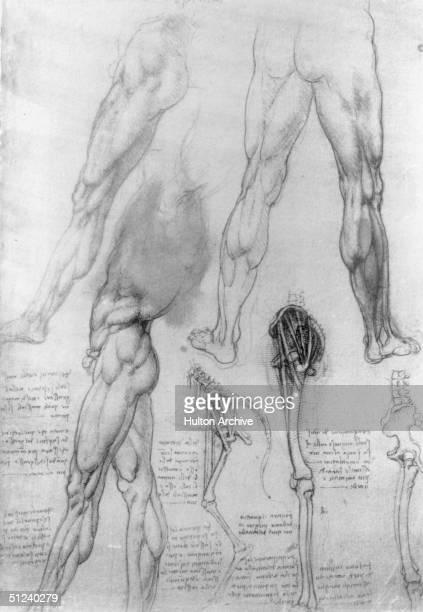 Circa 1500 Human and equine anatomical sketches by the Florentine artist and scientist Leonardo da Vinci