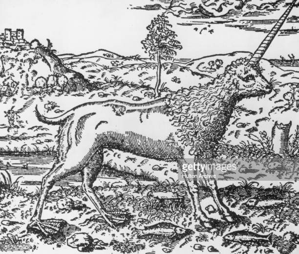 Circa 1500 The fabled unicorn having the head and legs of a horse and a long twisted horn set in the middle of its forehead was thought to possess...