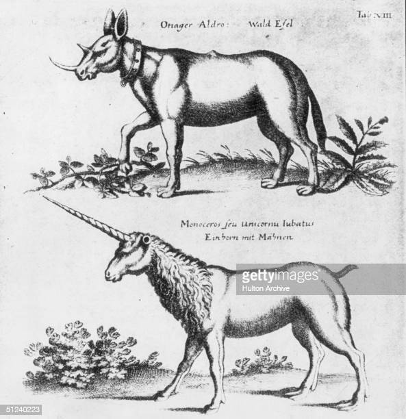 Circa 1500 Two mythical beasts the forest ass and the maned unicorn
