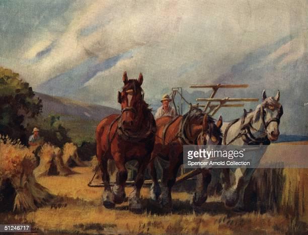 Circa 1700 Harvesting the crop using a team of shire horse Original Artist C Pasmore