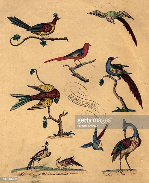 Circa 1750 Various species of bird common to India