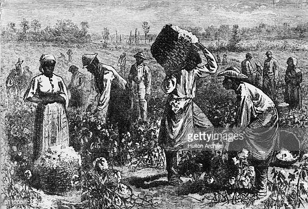 Slaves picking cotton on a plantation.