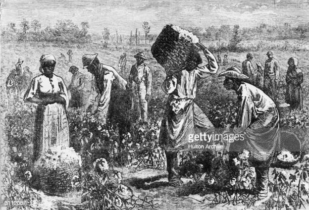 Enslaved people picking cotton on a plantation.