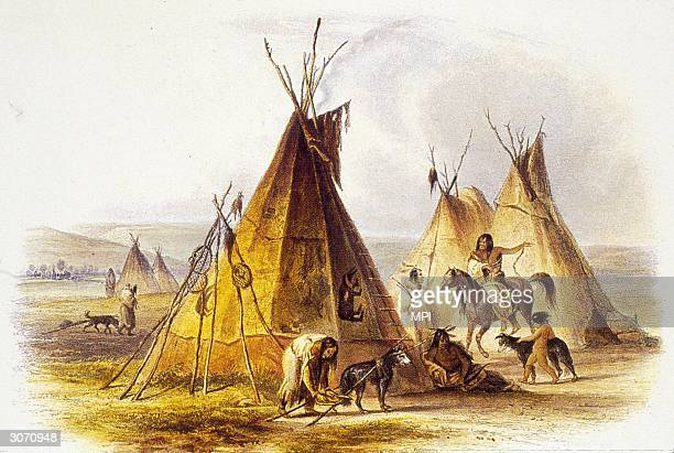 A woman attaches a small travois to a dog in front of a skin lodge or tepee in an Assiniboine encampment