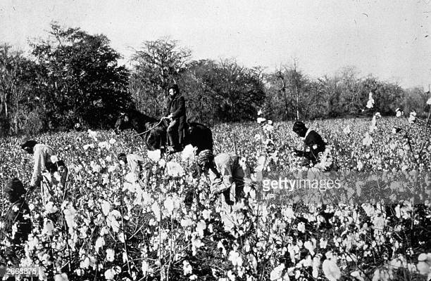 An overseer riding past cotton pickers in a field in the southern states of America