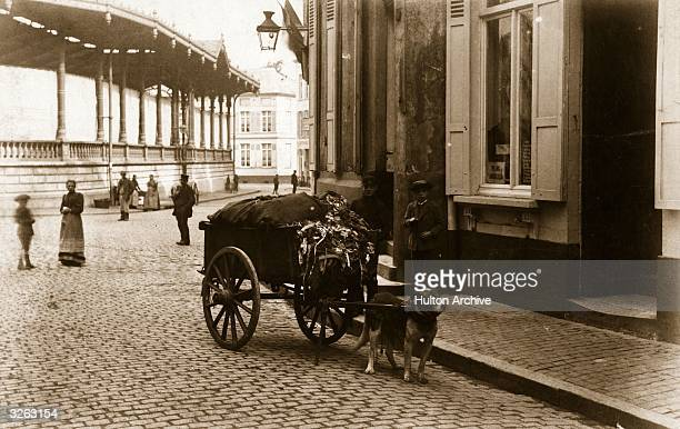 A dog pulls a cart laden with rags through the streets of Louvain Belgium