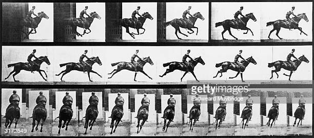 Sequence of stopaction images of a man galloping on a horse named Bouquet taken from two different perspectives Titled 'Bouquet with Rider ' Original...