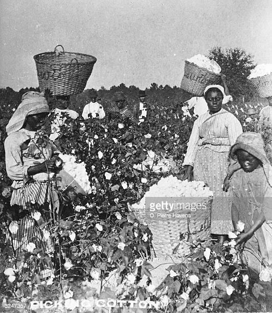 AfricanAmericans pick cotton in in a cotton field Savannah Georgia 1890s